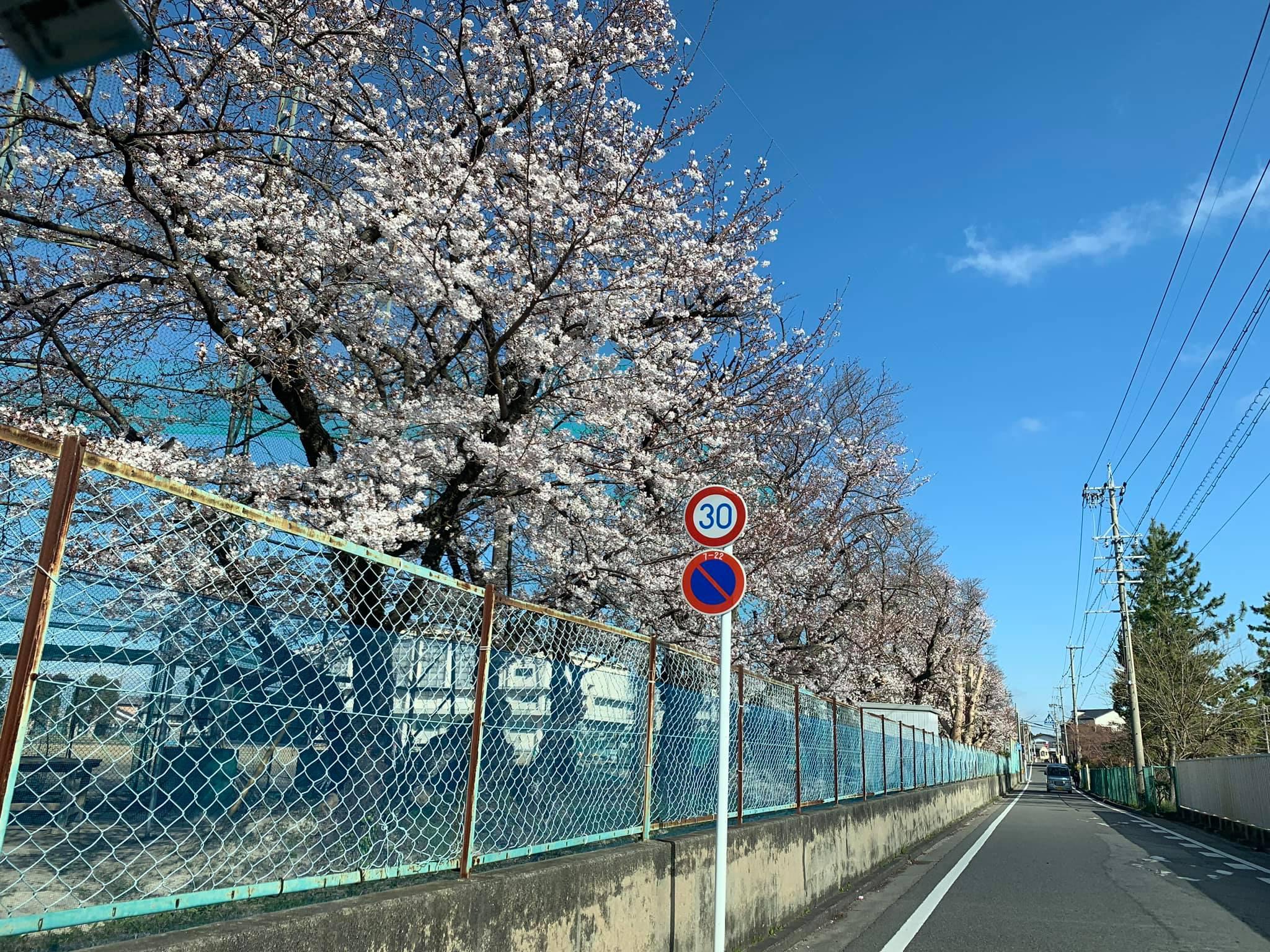 さくらの道。Sakuras-Road. 愛知県岡崎市 2019年4月3日 815
