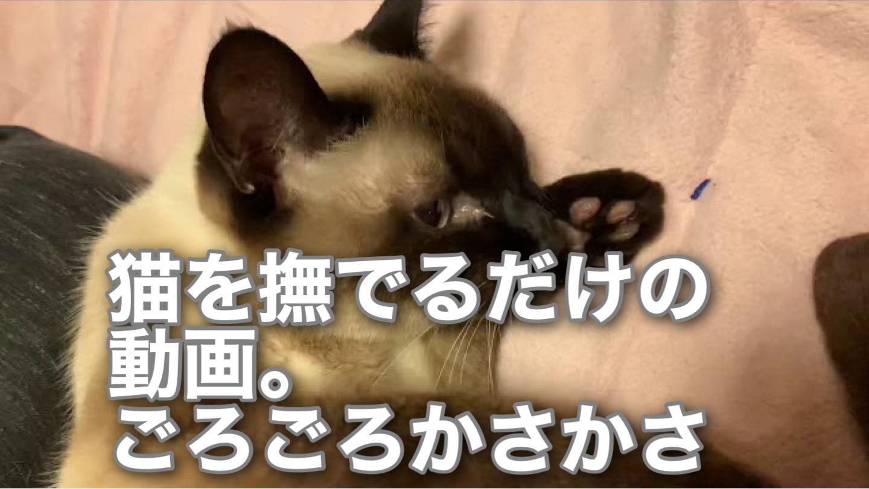 猫を撫でるだけの動画。ごろごろとかさかさ(笑)2021-01-11