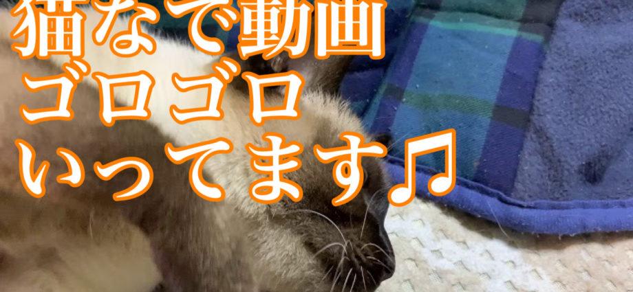 猫撫で動画。 こう言うのが流行ってるの? とテレビです言ってました(笑)←すぐ感化される(笑)