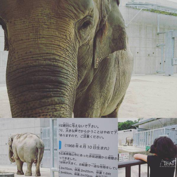 岡崎東公園 動物円 象のふじ子 2017-06-18