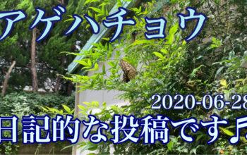 アゲハチョウ♬ 日記的な投稿です♬ 2020-06-28
